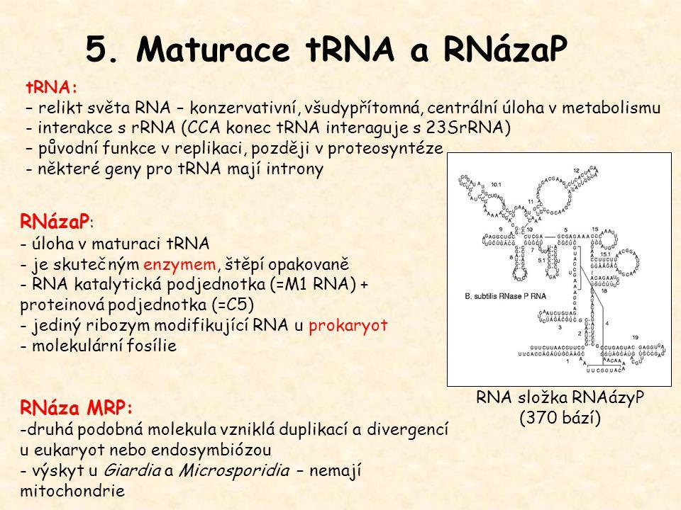 5. Maturace tRNA a RNázaP RNázaP: RNáza MRP: tRNA: