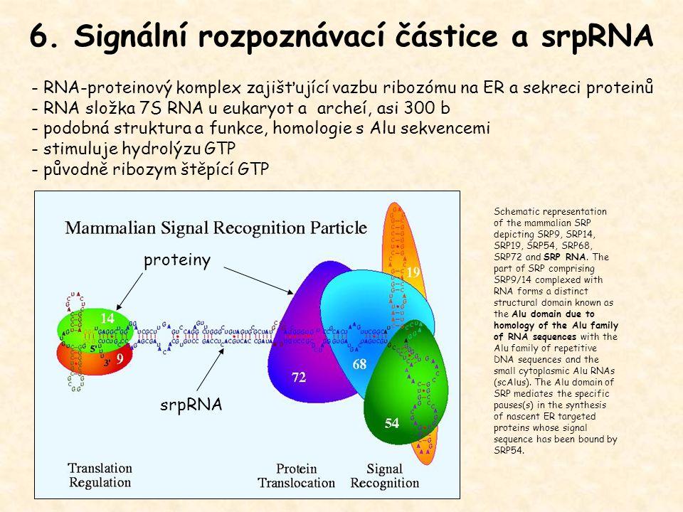 6. Signální rozpoznávací částice a srpRNA