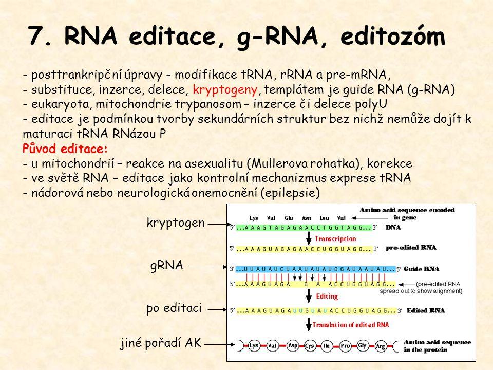 7. RNA editace, g-RNA, editozóm