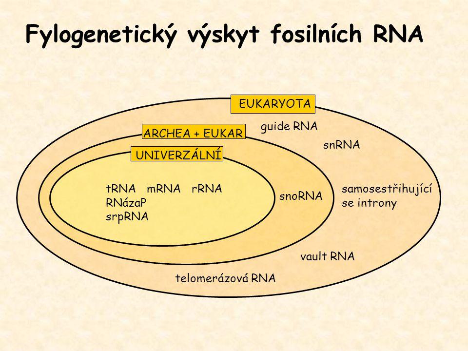 Fylogenetický výskyt fosilních RNA