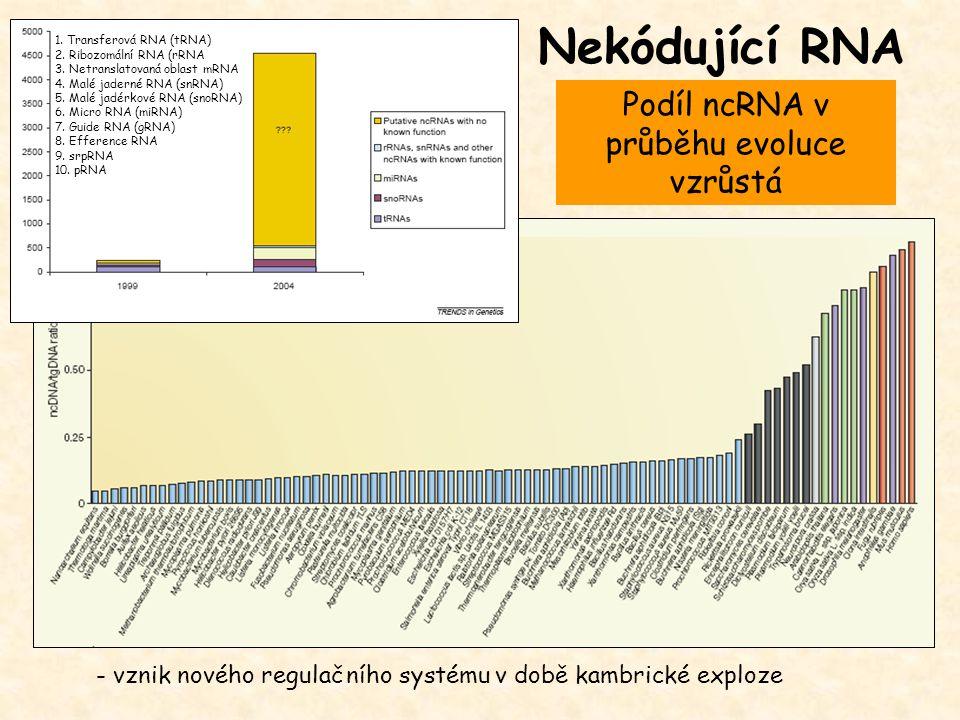 Podíl ncRNA v průběhu evoluce vzrůstá