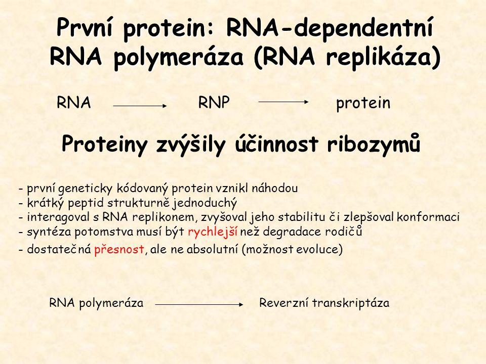 První protein: RNA-dependentní RNA polymeráza (RNA replikáza)