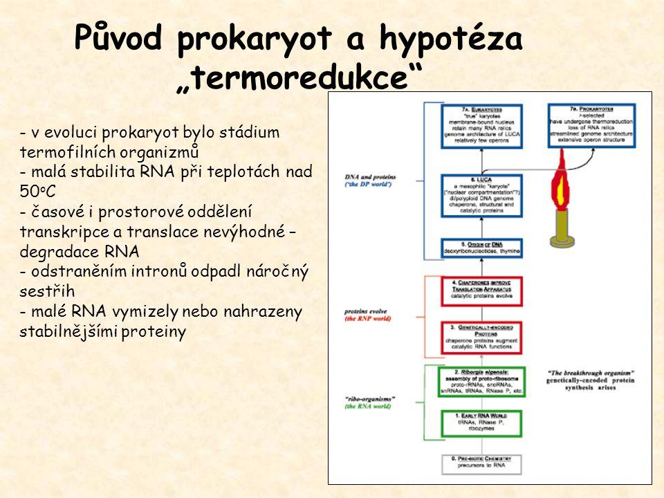 """Původ prokaryot a hypotéza """"termoredukce"""
