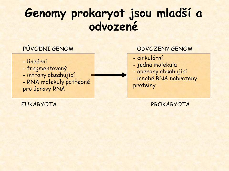 Genomy prokaryot jsou mladší a odvozené