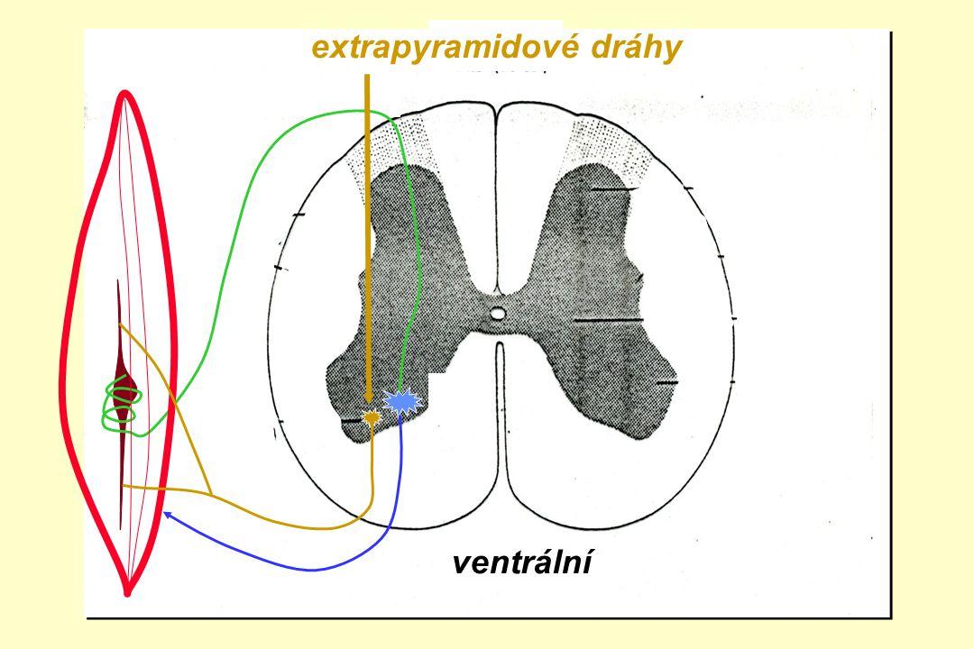 extrapyramidové dráhy