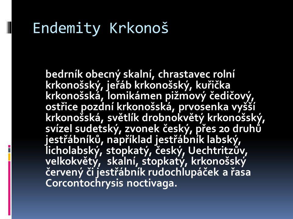Endemity Krkonoš