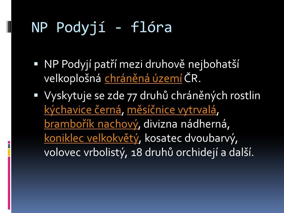 NP Podyjí - flóra NP Podyjí patří mezi druhově nejbohatší velkoplošná chráněná území ČR.