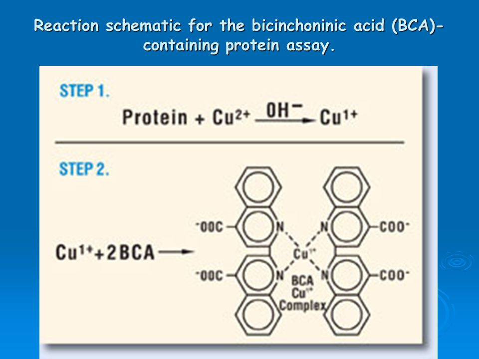 Reaction schematic for the bicinchoninic acid (BCA)-containing protein assay.