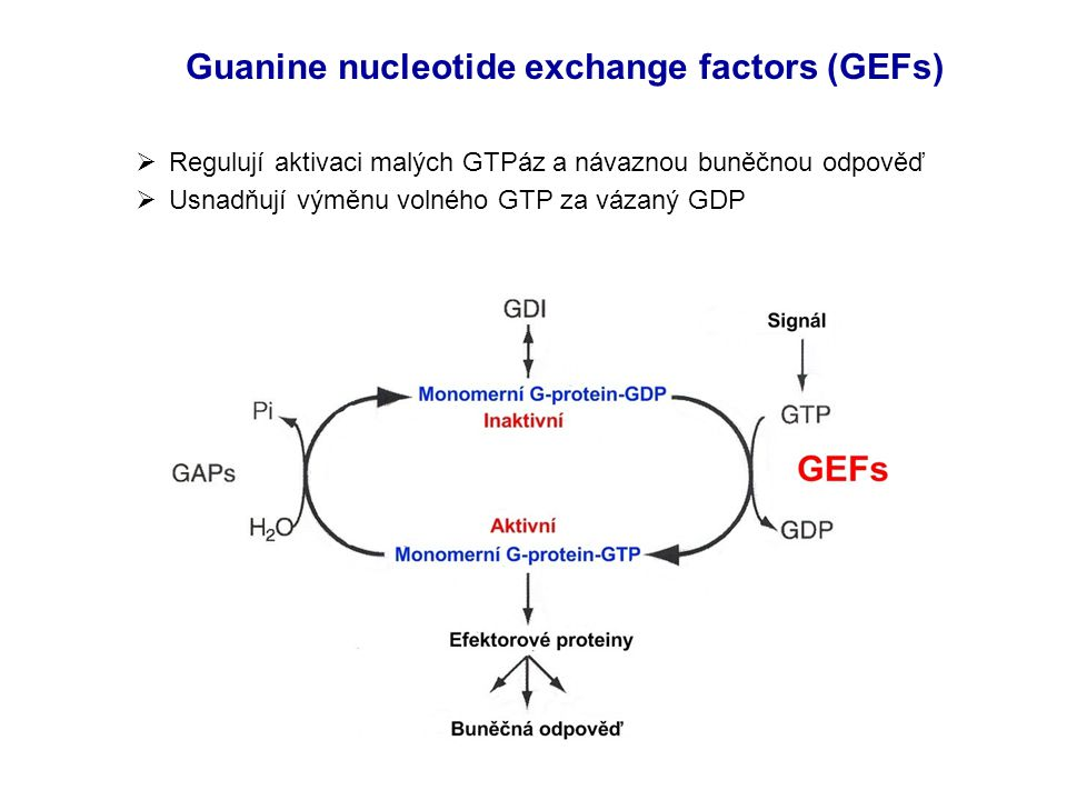 Guanine nucleotide exchange factors (GEFs)