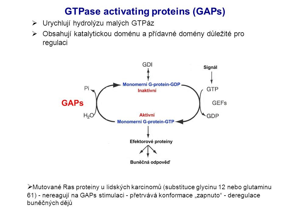 GTPase activating proteins (GAPs)