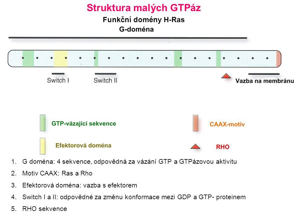 Struktura malých GTPáz
