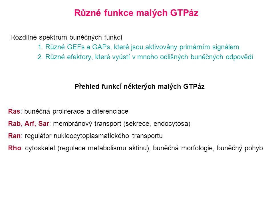 Různé funkce malých GTPáz Přehled funkcí některých malých GTPáz