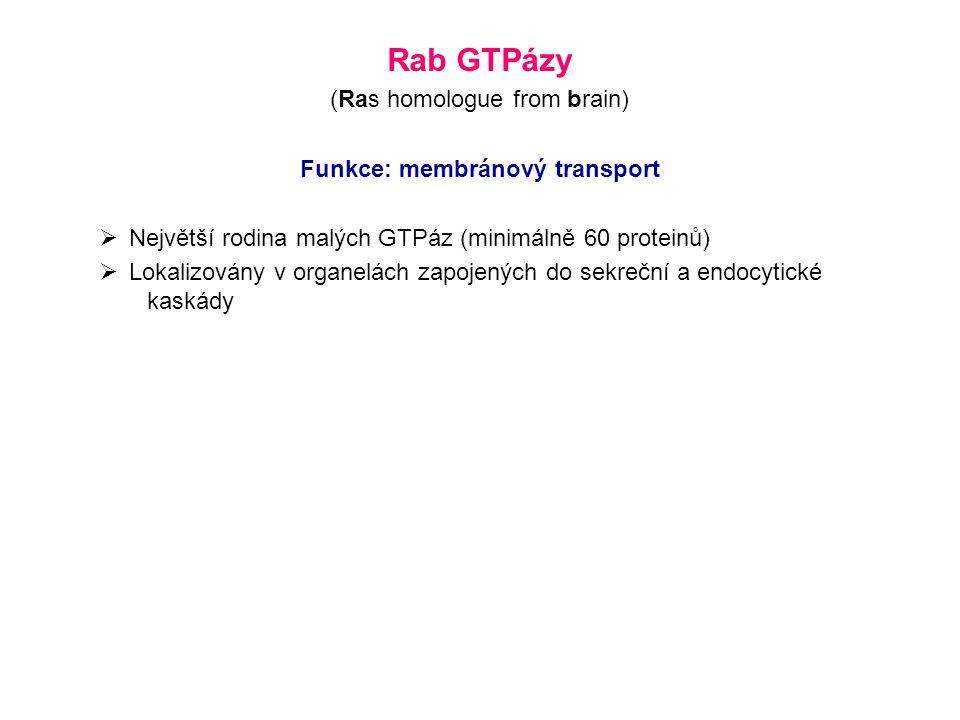 Funkce: membránový transport