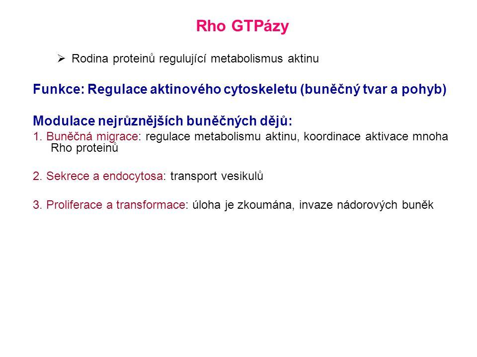 Rho GTPázy Rodina proteinů regulující metabolismus aktinu. Funkce: Regulace aktinového cytoskeletu (buněčný tvar a pohyb)