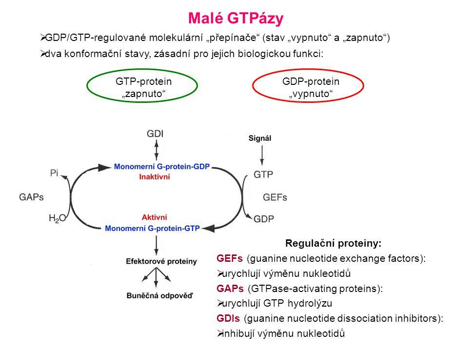 """Malé GTPázy GDP/GTP-regulované molekulární """"přepínače (stav """"vypnuto a """"zapnuto ) dva konformační stavy, zásadní pro jejich biologickou funkci:"""