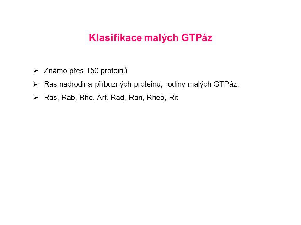 Klasifikace malých GTPáz