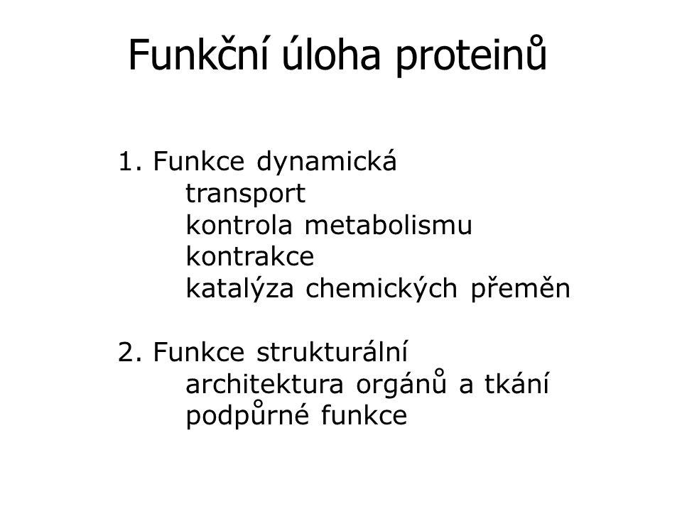 Funkční úloha proteinů