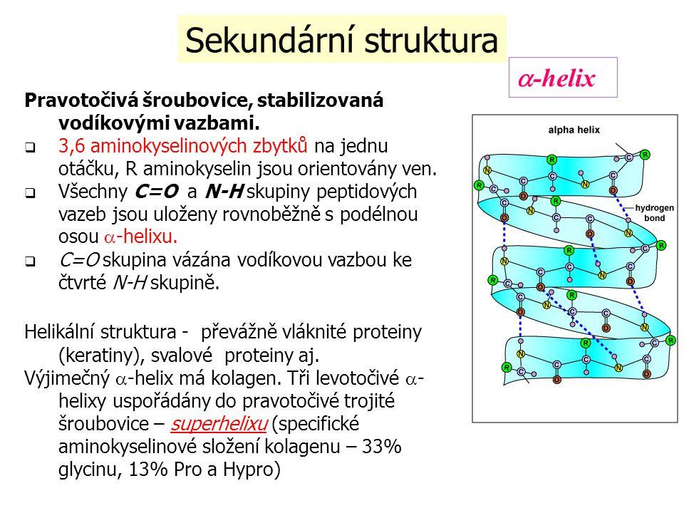 Sekundární struktura a-helix