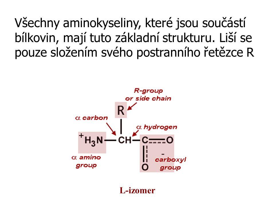 Všechny aminokyseliny, které jsou součástí bílkovin, mají tuto základní strukturu. Liší se pouze složením svého postranního řetězce R