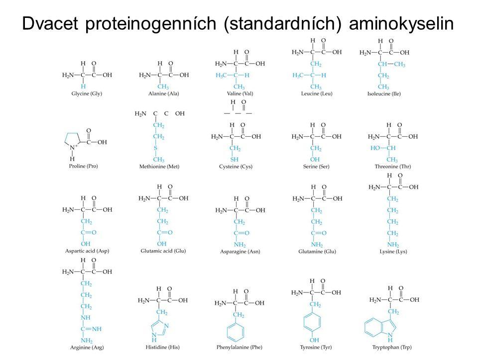 Dvacet proteinogenních (standardních) aminokyselin