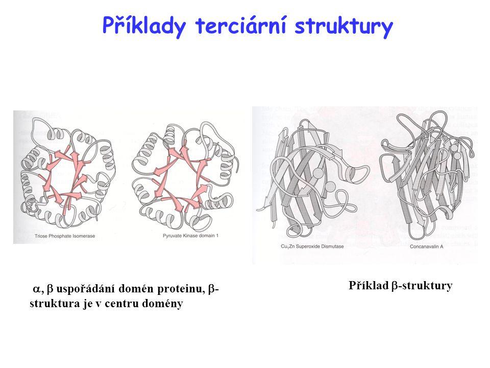 Příklady terciární struktury