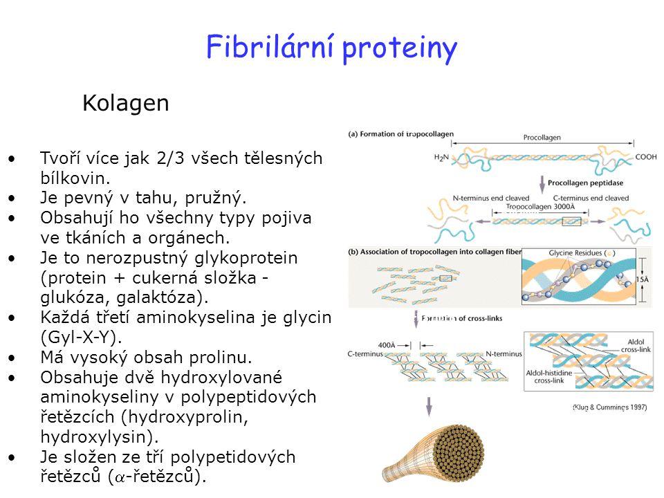 Fibrilární proteiny Kolagen