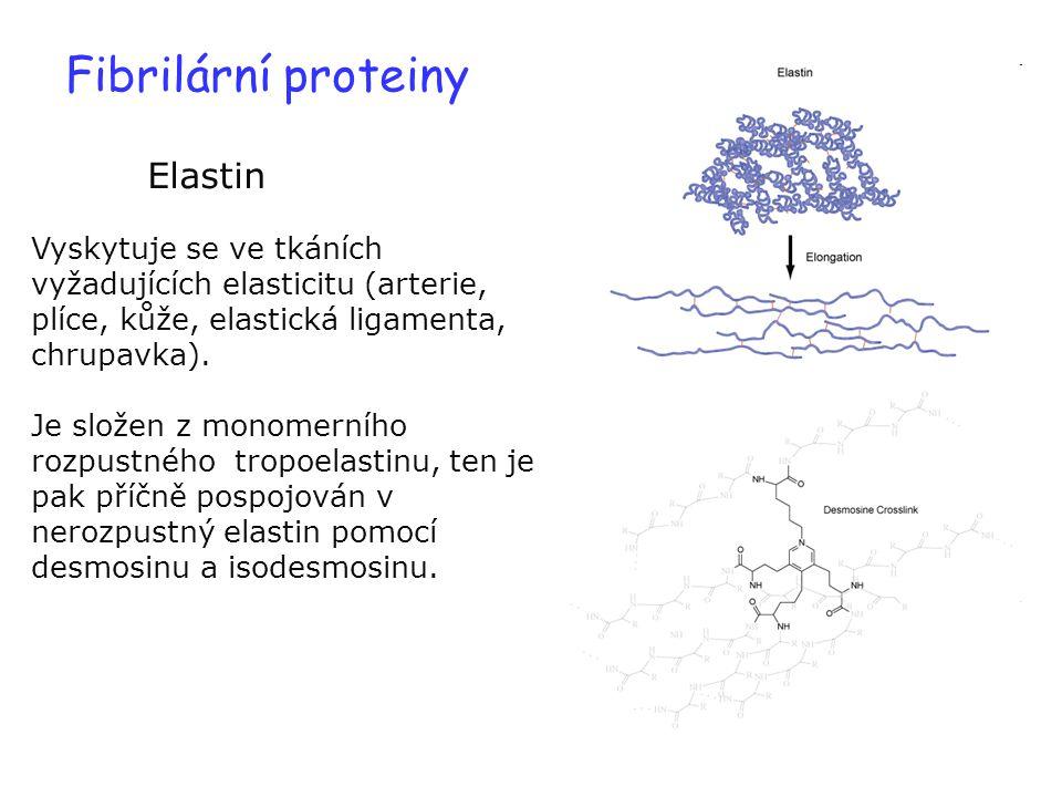 Fibrilární proteiny Elastin