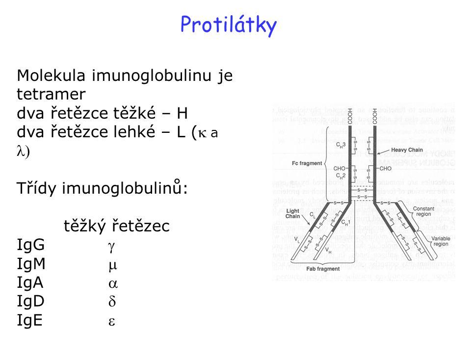 Protilátky Molekula imunoglobulinu je tetramer dva řetězce těžké – H