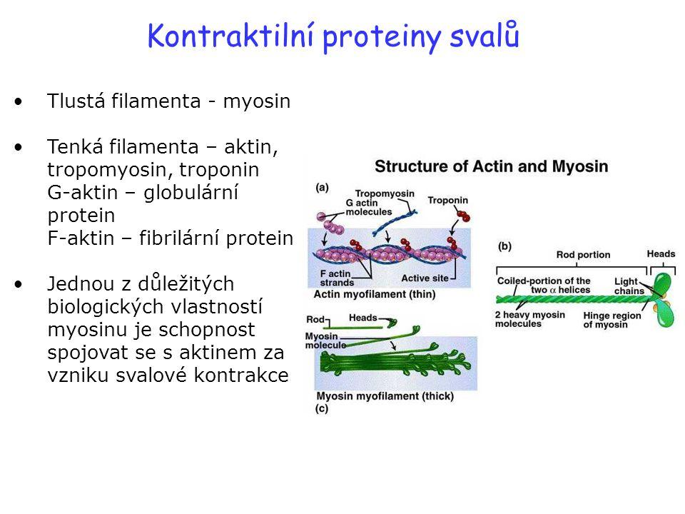 Kontraktilní proteiny svalů