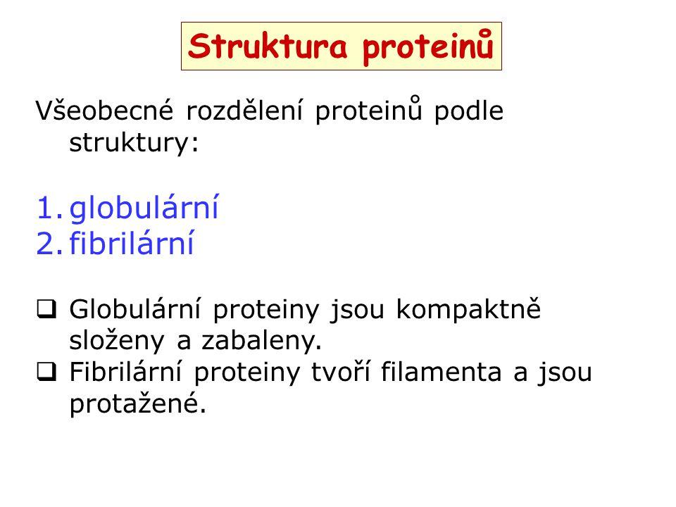 Struktura proteinů globulární fibrilární