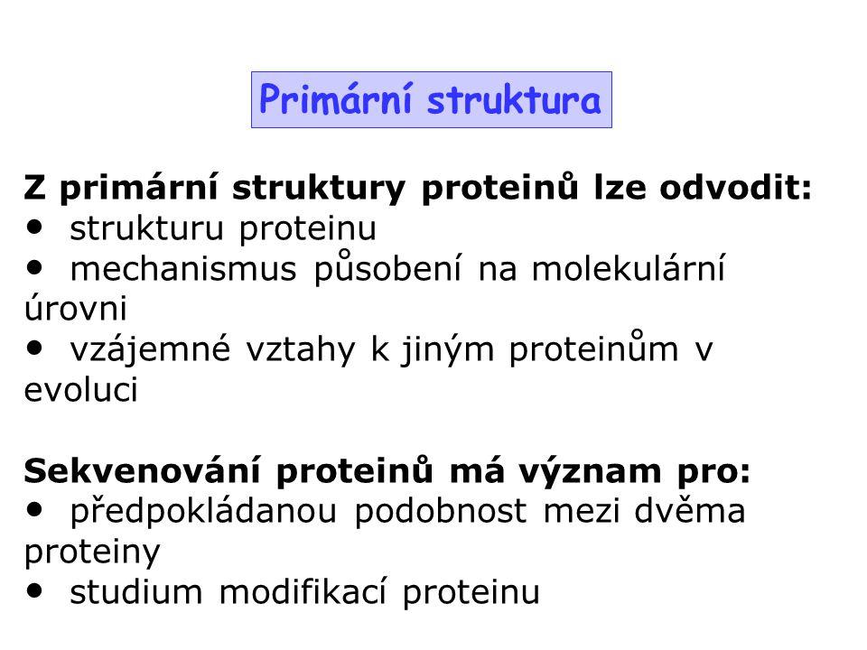 Primární struktura Z primární struktury proteinů lze odvodit: