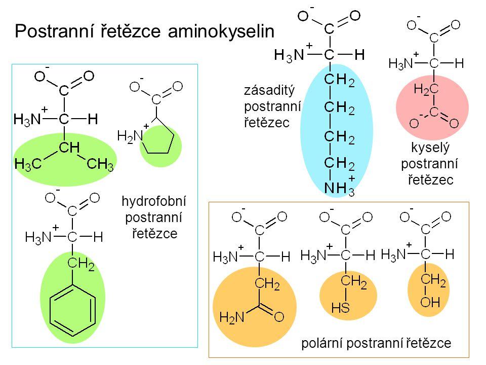 Postranní řetězce aminokyselin