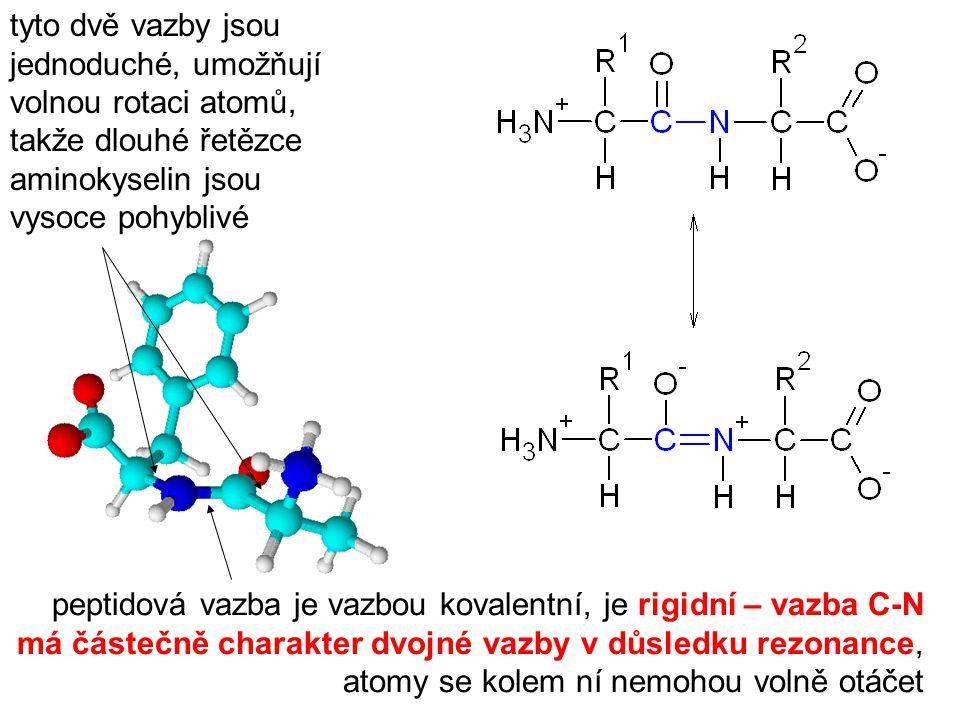 tyto dvě vazby jsou jednoduché, umožňují volnou rotaci atomů, takže dlouhé řetězce aminokyselin jsou vysoce pohyblivé