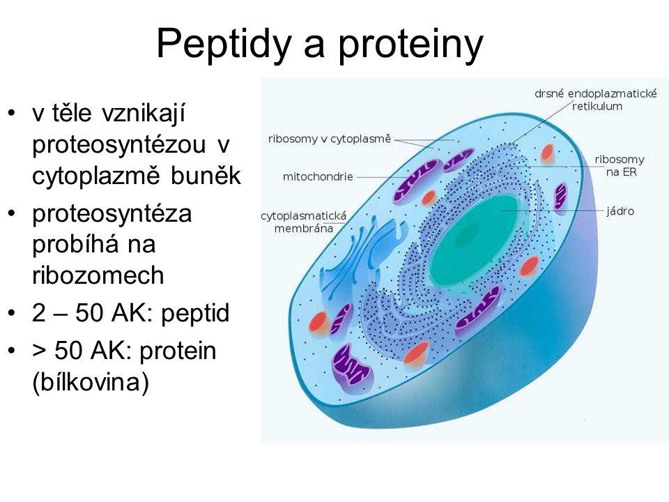 Peptidy a proteiny v těle vznikají proteosyntézou v cytoplazmě buněk