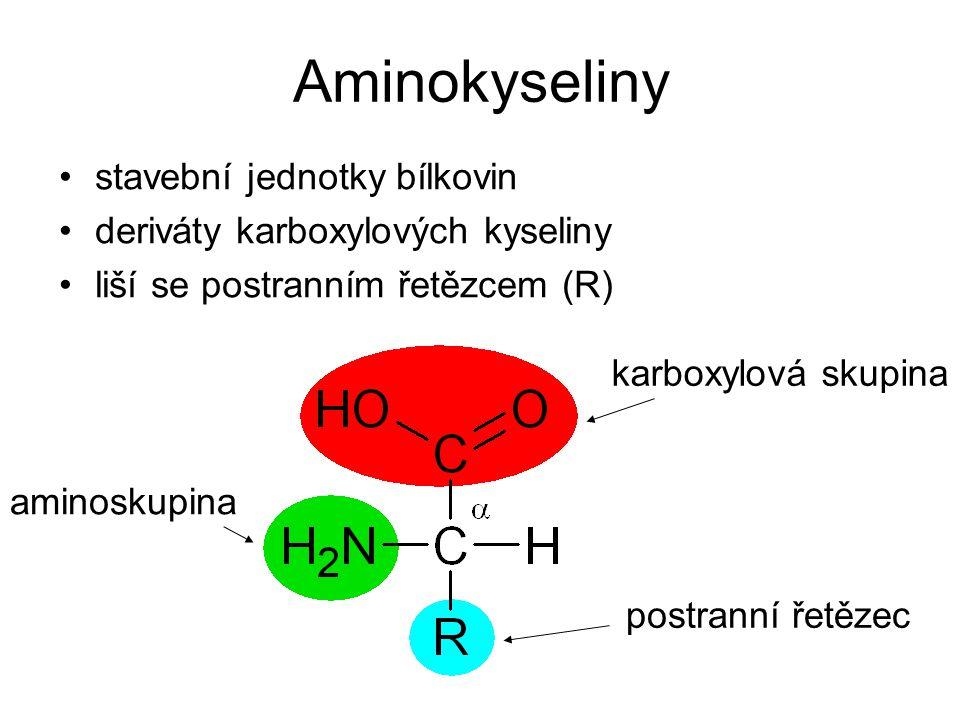 Aminokyseliny stavební jednotky bílkovin