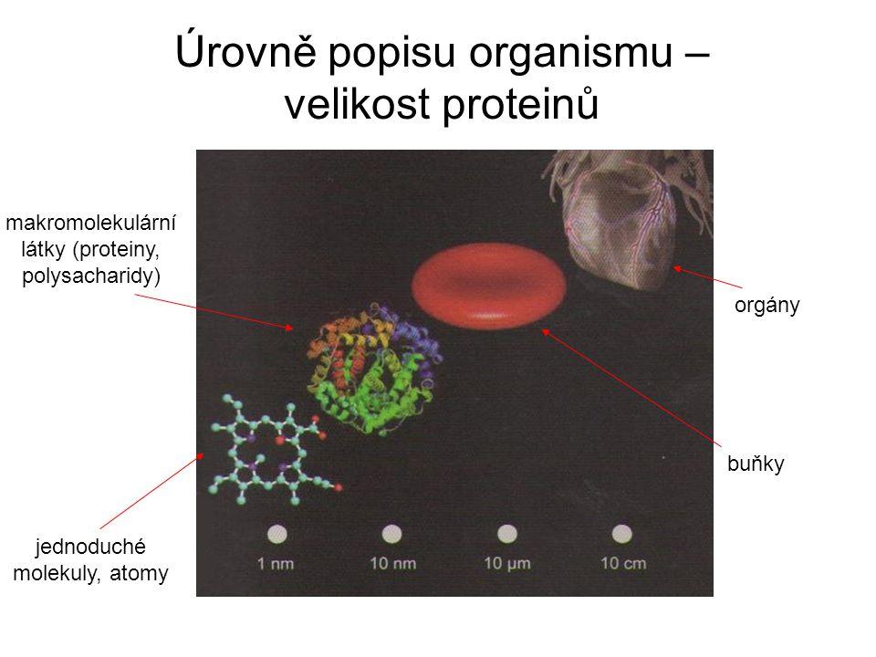 Úrovně popisu organismu – velikost proteinů