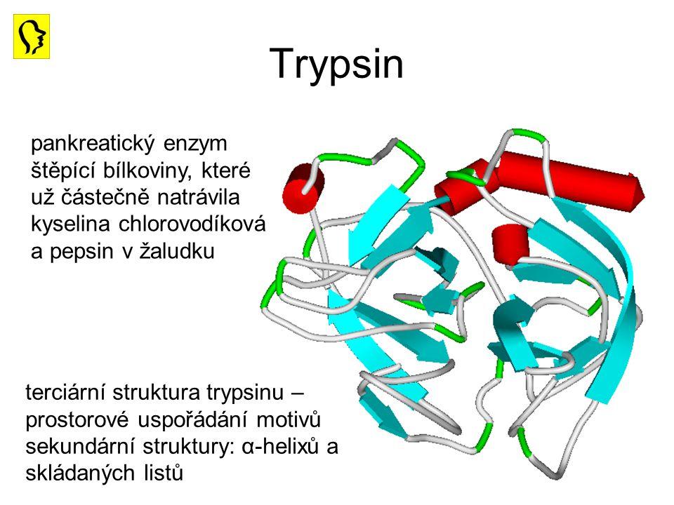 Trypsin pankreatický enzym štěpící bílkoviny, které už částečně natrávila kyselina chlorovodíková a pepsin v žaludku.