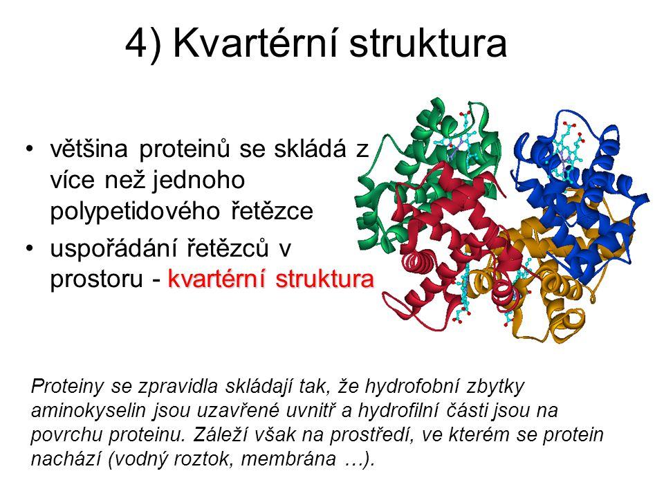 4) Kvartérní struktura většina proteinů se skládá z více než jednoho polypetidového řetězce. uspořádání řetězců v prostoru - kvartérní struktura.