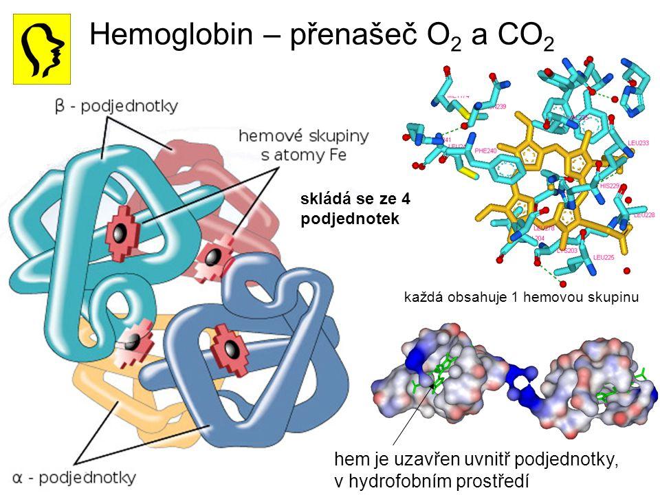 Hemoglobin – přenašeč O2 a CO2