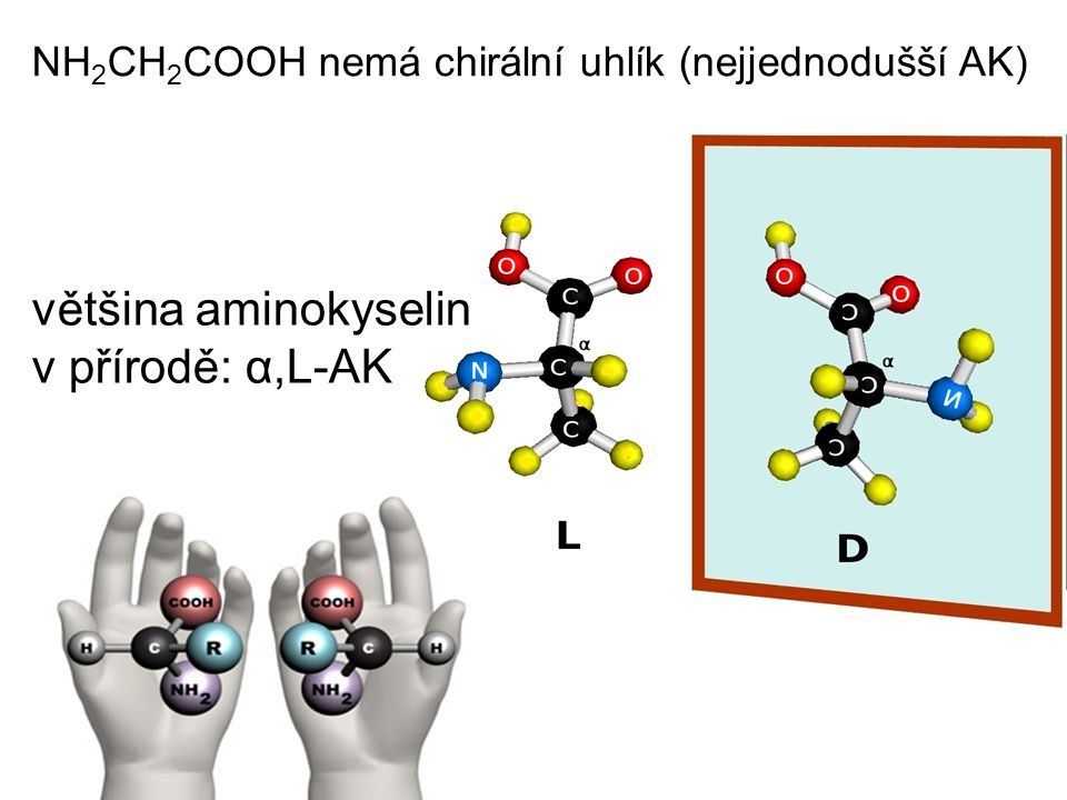 většina aminokyselin v přírodě: α,L-AK
