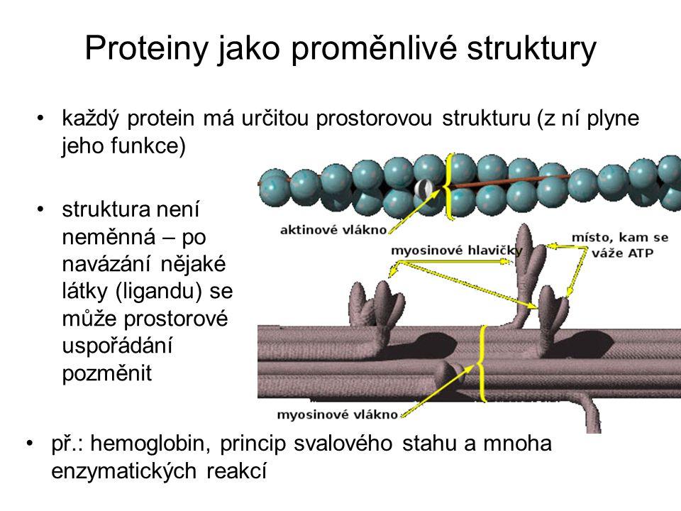 Proteiny jako proměnlivé struktury