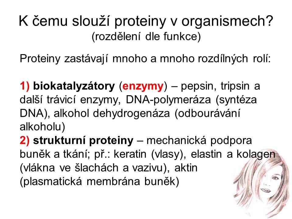 K čemu slouží proteiny v organismech (rozdělení dle funkce)