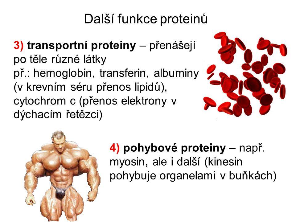 Další funkce proteinů 3) transportní proteiny – přenášejí po těle různé látky.
