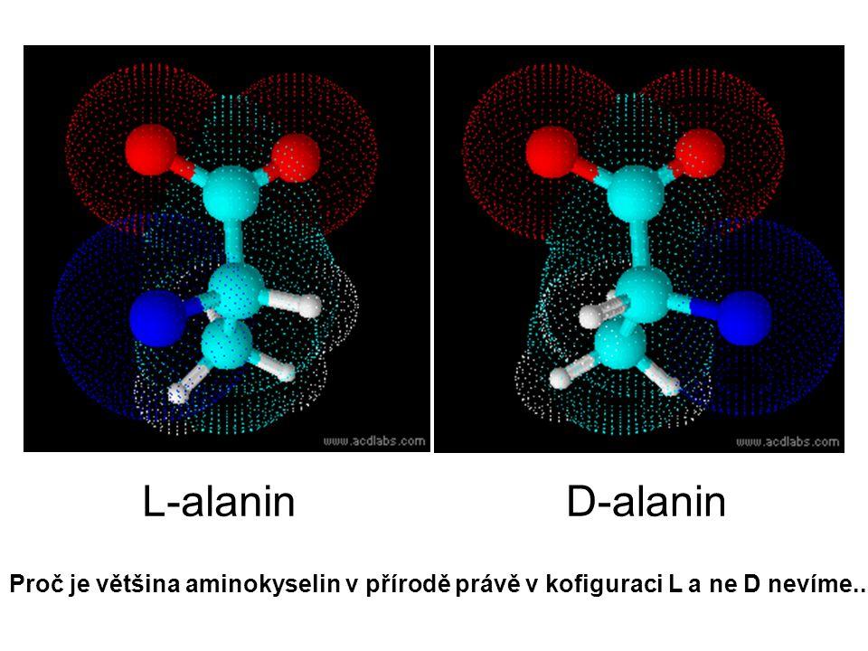L-alanin D-alanin Proč je většina aminokyselin v přírodě právě v kofiguraci L a ne D nevíme..