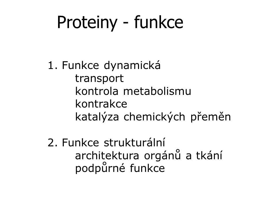 Proteiny - funkce 1. Funkce dynamická transport kontrola metabolismu