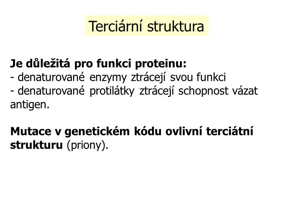 Terciární struktura Je důležitá pro funkci proteinu: