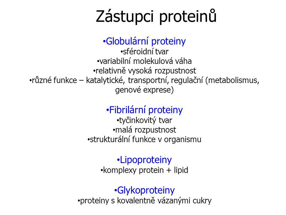 Zástupci proteinů Globulární proteiny Fibrilární proteiny Lipoproteiny