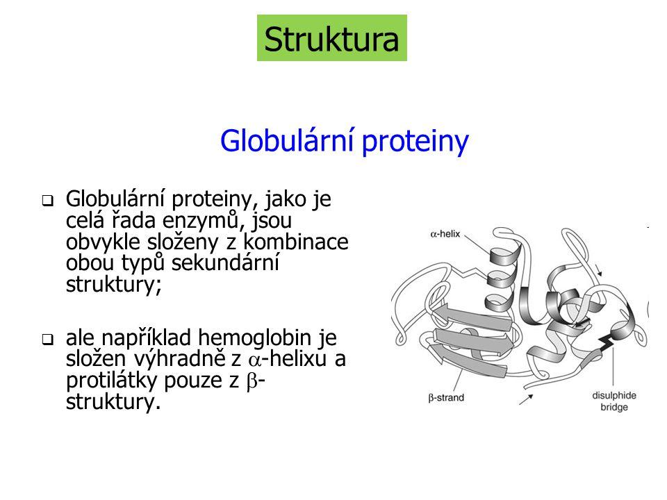 Struktura Globulární proteiny