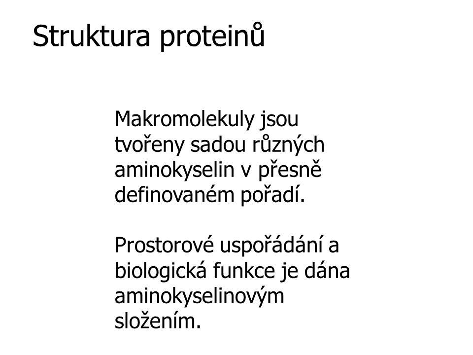 Struktura proteinů Makromolekuly jsou tvořeny sadou různých aminokyselin v přesně definovaném pořadí.