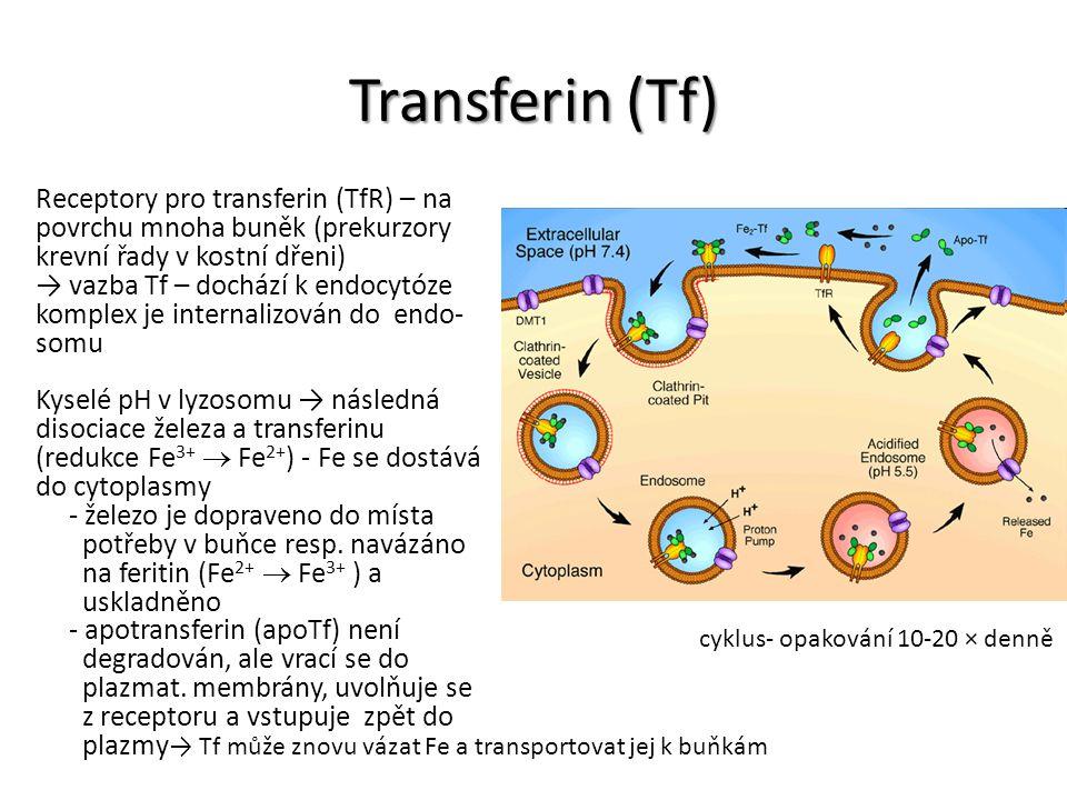Transferin (Tf) Receptory pro transferin (TfR) – na